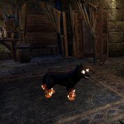 Волчонок из ночных кошмаров