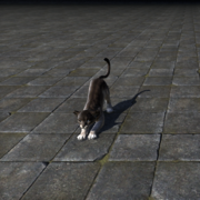 Котёнок благородного риверхолдского сенч-льва