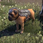 Боевой пёс альянса