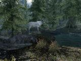 Ciervo blanco