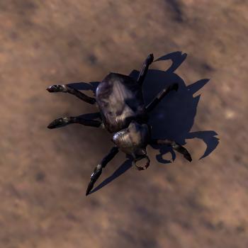 File:ESO Beetle.png