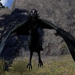 Wrothgarska Harpia z gry The Elder Scrolls Online