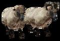 Beast oblivion sheep.png