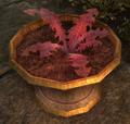 Crimson Nirnroot Online.png