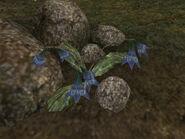 Каменевка (растение) 01