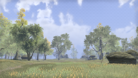 Сиродил (Online) — Зелёный луг
