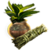 Treasure Plant