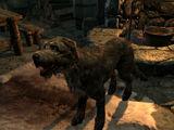 Исграмор (собака)