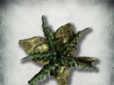 Лепестки горьколистника