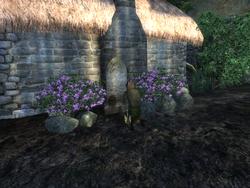 Месть подают холодной — Коррик молится на могиле жены