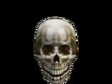 Skull of a Skaal Warrior