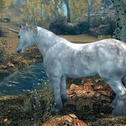 Unicorno Skyrim