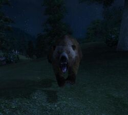 Бурый медведь-шатун Западного Вельда