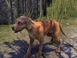 Собака (Online)