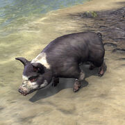 Чёрно-белая свинья псиджиков