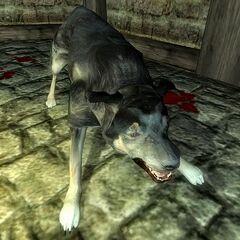 Бешеный пёс