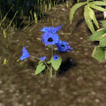 Corn Flower.png