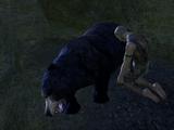 Beasts of Falinesti