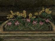 Ивоцвет и золотой канет - клумба