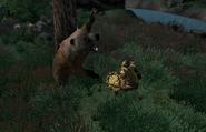 Bear Season Attack