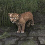 Сенч-львёнок