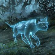 Призрачная домашняя кошка