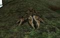Mudcrab (Morrowind).png