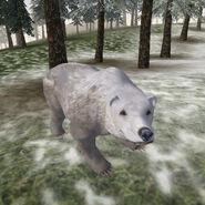 Снежный медведь (TESIIIB)