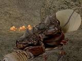 Матка квама (Morrowind)
