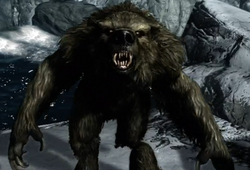 Werebear (Skyrim)