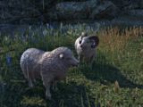 Sheep (Online)