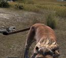 Lion (Online)