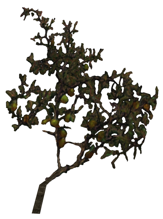 File:Roobrush.png