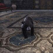 Чёрный медвежонок