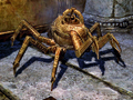 Aicantars Spider.png