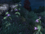 Nightshade (Oblivion)