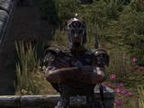 Captain Verus
