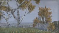 Сиродил (Online) — Фанакасекул