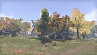 Сиродил (Online) — Сумеречный лес