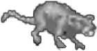 Rat (Arena)