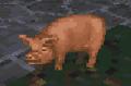 Pig daggerfall.png