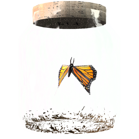 File:TESV Butterfly In A Jar Crop.png