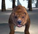Bear (Bloodmoon)