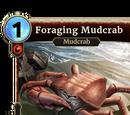 Foraging Mudcrab