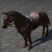 Sorrel Horse Рыжая лошадь