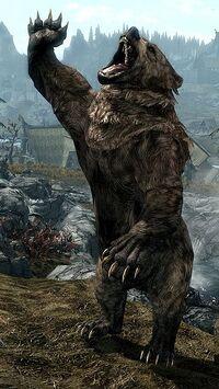 Oso Skyrim Elder Scrolls Fandom Powered By Wikia
