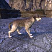 Винтерхолдский волкодав
