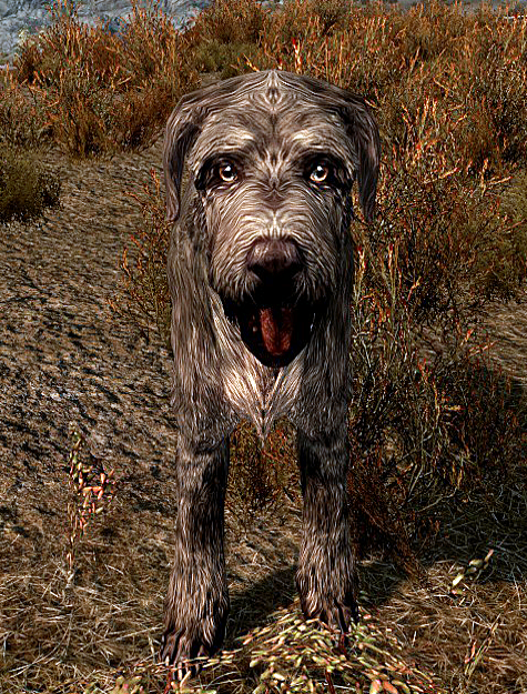 I Can T Find The Stray Dog In Skyrim