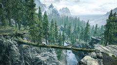 Упавшее дерево - картинка