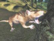 OBCreature-rat